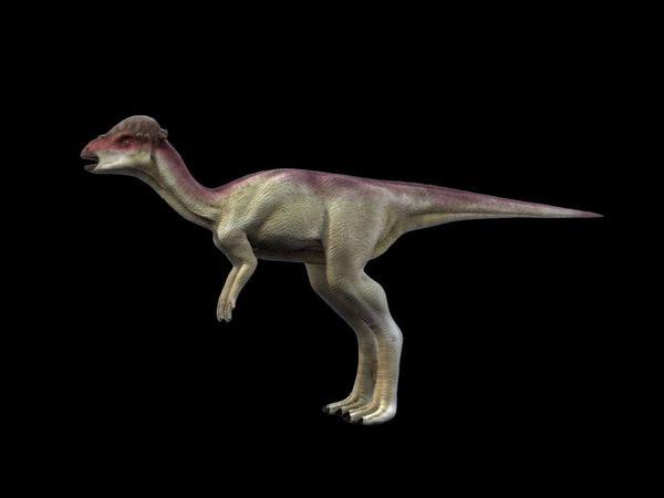 Đây là lần đầu tiên dấu vết của loại khủng long này được tìm thấy tại Mexico.