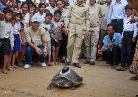 Người dân Campuchia nhìn rùa được gắn vệ tinh theo dõi trên mai.
