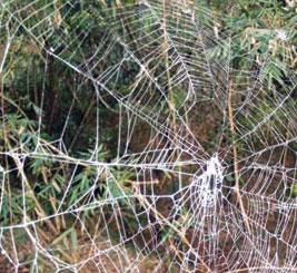 Áo giáp làm từ tơ nhện