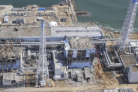 Nghiên cứu sinh vật quanh nhà máy điện Fukushima I