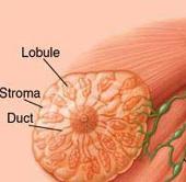 Phát hiện nhân tố biến đổi gene điều trị ung thư vú