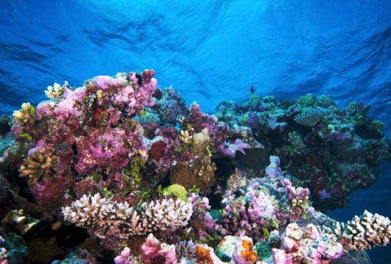 Khung cảnh ở rạn san hô Great Barrier