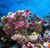 """Phát hiện san hô ở độ sâu """"chưa từng nghĩ đến"""""""
