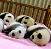 Chùm ảnh động vật đáng yêu nhất năm 2012