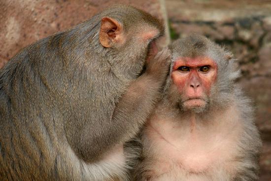 Nghiên cứu cho thấy loài vật cũng có đạo đức và sự thông cảm