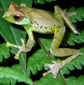 Chiêm ngưỡng các loài sinh vật cực hiếm của sông Mekong