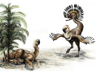 Những con khủng long oviraptor dùng chiếc đuôi của chúng để tán tỉnh bạn tình.