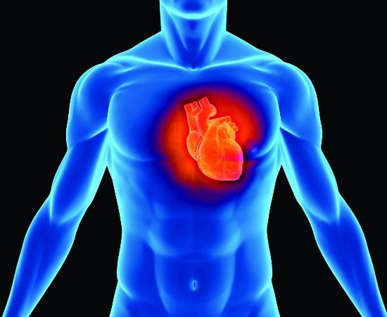 Tế bào ở não tham gia vào việc điều khiển hoạt động của trái tim.