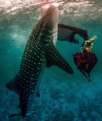 Siêu mẫu Hannah Fraser và cá mập voi khổng lồ ở ngoài khơi Oslob, Philippines.