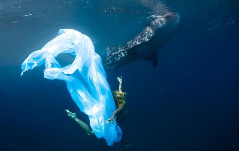 Hannah và đồng nghiệp là Roberta Mancino lặn sâu khoảng gần 5m với loài cá lớn nhất thế giới - cá nhám voi với chiều dài có thể lên tới 12m.