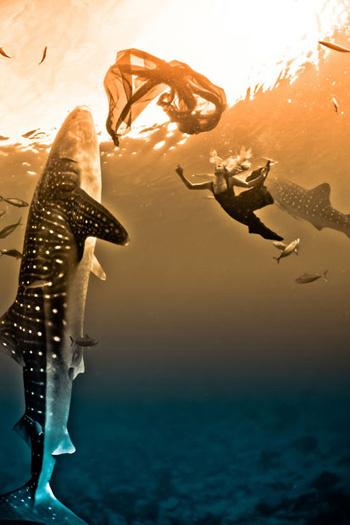 Giống như phần lớn các loại cá mập khác, tập tính sinh  sản của cá mập voi vẫn chưa rõ. Nhiều người tin rằng cá  nhám voi đạt tới độ tuổi trưởng thành vào khoảng 30 năm  và chúng có tuổi thọ ước tính khoảng 60 - 150 năm.