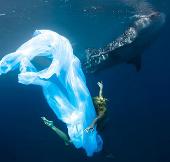 Người đẹp bơi cùng cá mập
