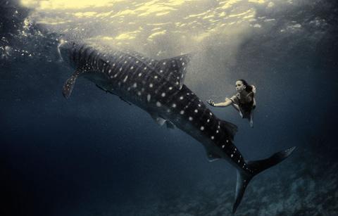 Hai nhiếp ảnh gia là Shawn Heinrichs và Kristian Schmidt  lặn nhiều giờ dưới đại dương để ghi lại hình ảnh.