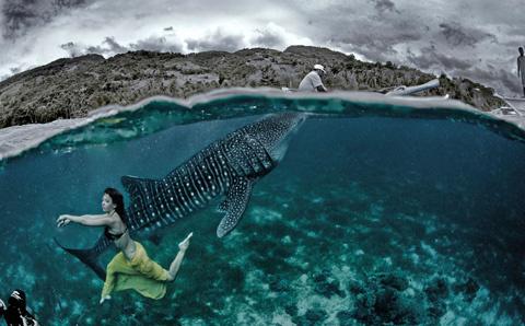 Cá mập voi còn gọi là cá nhám voi sinh sống trong các đại dương thuộc vùng nhiệt đới và ôn đới ấm của thế giới.