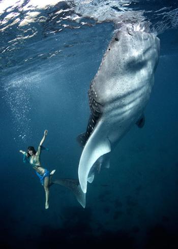 Cá mập voi là loài tích cực săn mồi. Theo những  thủy thủ, cá nhám voi tập trung tại các bãi đá ngầm  ngoài khơi bờ biển Belize (vùng Caribe), đây là nơi có thể bổ sung thêm cho thức ăn thông thường của chúng.