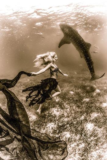 Bộ ảnh chụp với mục đích kêu gọi mọi người bảo vệ cá mập voi trước nguy cơ tuyệt chủng.