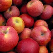 Thiếu oxy giúp trái cây lâu hỏng hơn