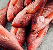 84% lượng cá thế giới bị nhiễm độc thủy ngân