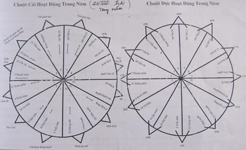 Biểu đồ chu kỳ hoạt động của các loài chuột mà ông Trần Quang  Thiều ghi lại để đặt bẫy diệt chúng hiệu quả hơn.