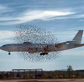 Định vị chim chóc giúp giảm tai nạn hàng không