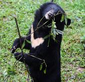 Không di dời Trung tâm cứu hộ gấu Tam Đảo