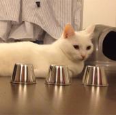 Video: Chú mèo thông minh khiến cư dân mạng thán phục