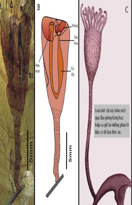 Phát hiện mới về cơ thể loài sinh vật cổ đại có xúc tu