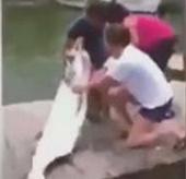 """Video: Cá cháo """"khủng"""" tấn công người"""