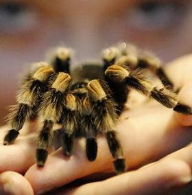 Một loài nhện mới mang tên Angelina Jolie