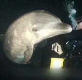 Video: Cá heo nhờ người giúp đỡ