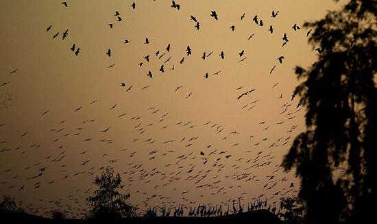 Đàn sếu bay trên bờ Đông của sông Jordan ở Jordan. Đây là khu vực  sinh sống của nhiều loài chim di cư, như sếu, bồ nông, chim nước,...