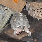 Rùa sống sót trong phòng kín hơn 30 năm