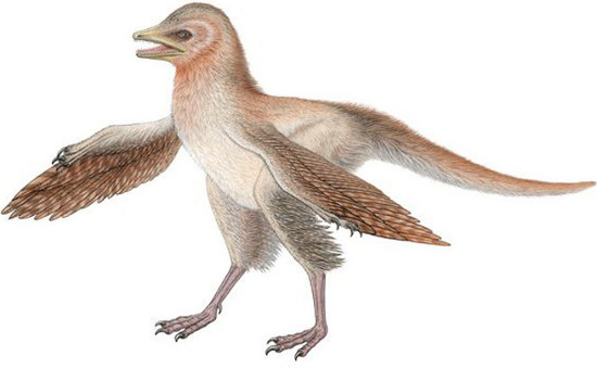 Khủng long Eosinopteryx brevipenna