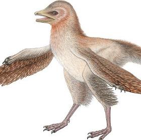 Phát hiện loài khủng long tí hon có lông từ kỷ Jura