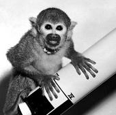 Khỉ trở về Trái đất sau chuyến chu du vũ trụ