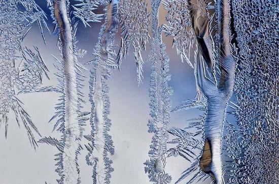 """Cây phủ lớp tuyết trong suốt, đẹp """"mong manh""""."""