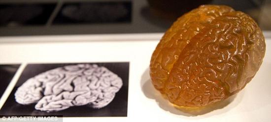 Mô hình não của thiên tài Albert Einstein được trưng bày tại London