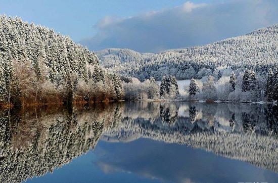 Rừng thông phủ tuyết soi bóng mặt hồ.