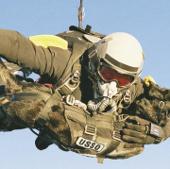 Chiêu tuyển chó kỳ lạ của quân đội Mỹ