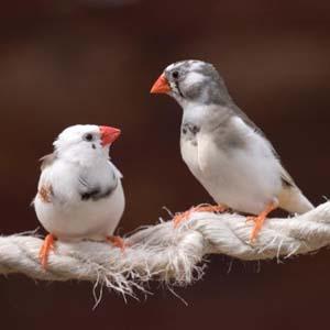 Tiếng chim giúp người bệnh nhanh phục hồi sức khỏe