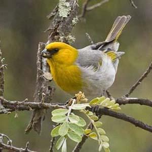 Chiêm ngưỡng những loài chim quý hiếm nhất thế giới
