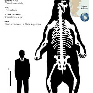 Phát hiện hóa thạch gấu khổng lồ