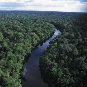 Hạn hán ở vùng rừng Amazon gây biến đổi khí hậu