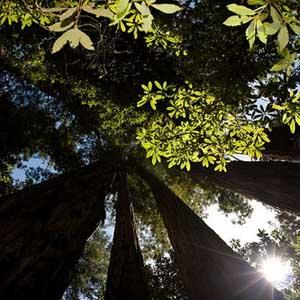 """10 """"điểm nóng"""" về hệ sinh thái rừng"""