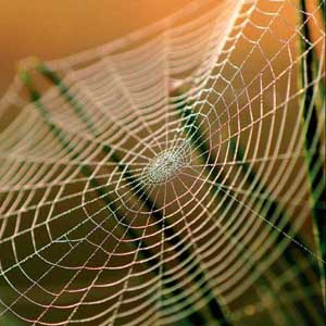 Bí ẩn sự chắc khỏe của tơ nhện đã được khám phá