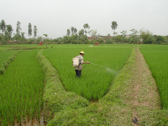 Sản xuất chế phẩm thuốc trừ sâu không độc hại