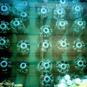 Mỹ: Kêu gọi tái chế nhiên liệu hạt nhân