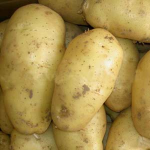 Gây stress cho khoai tây