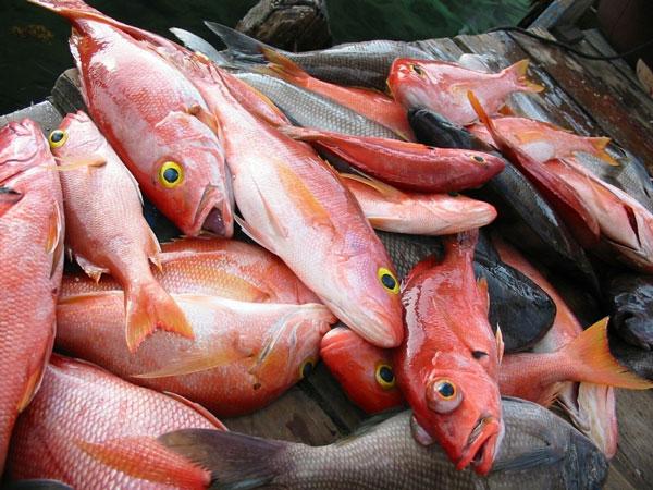 Khí CO2 làm cá phát điên