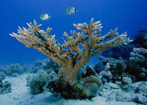 Biển là trụ cột chính phát triển kinh tế bền vững